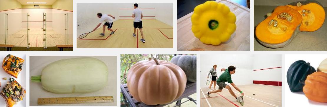Squash Search Results